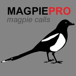 REAL Magpie Calls for Hunting + Magpie Sounds! + BLUETOOTH COMPATIBLE