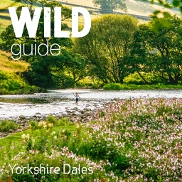 Wild Guide Yorkshire Dales