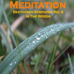 Meditation - Beethoven 4 in the Stormy Woods