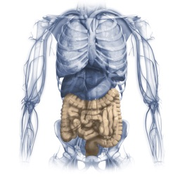 Gastrointestinal system Miniatlas