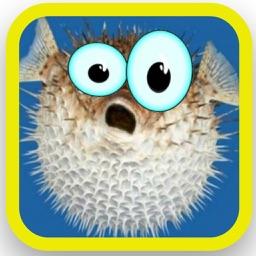 Ace battle puffer fish saga puffer fish vs sea monster for Blowfish vs puffer fish