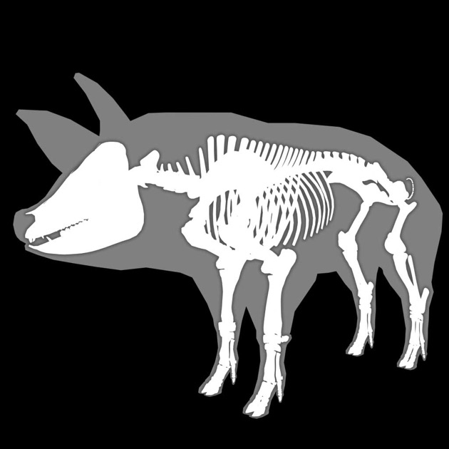 3D Canine Anatomy on the App Store