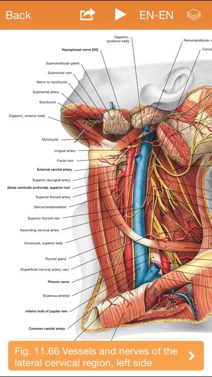 Sobotta Anatomy Atlas Free screenshot-3