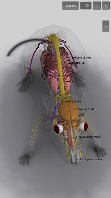 3d Rat Anatomy By Biosphera