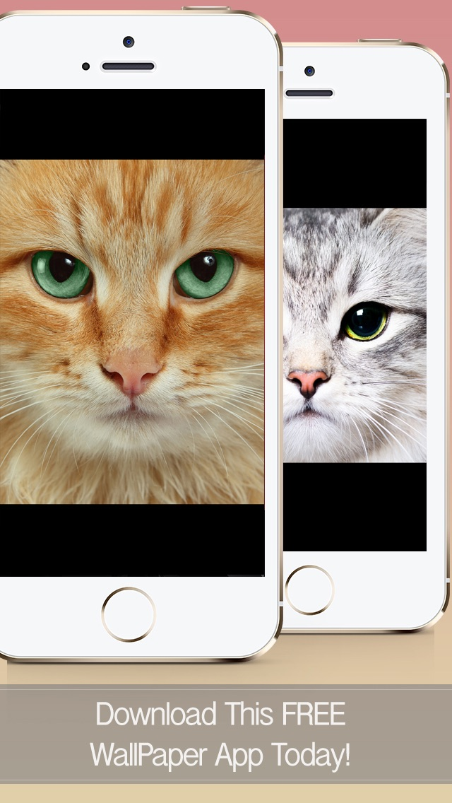 Cat Wallpapers, Themes & Backgrounds - Download Cute Cats