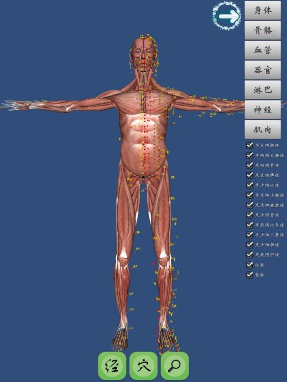 人体经穴3D图解