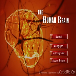 HumanBrainInteractive