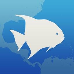 Fishlist: Caribbean