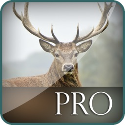 3D Deer Hunt-ing Big Game Bullet Juggle Challenge Pro