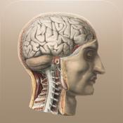 Classic Anatomy icon