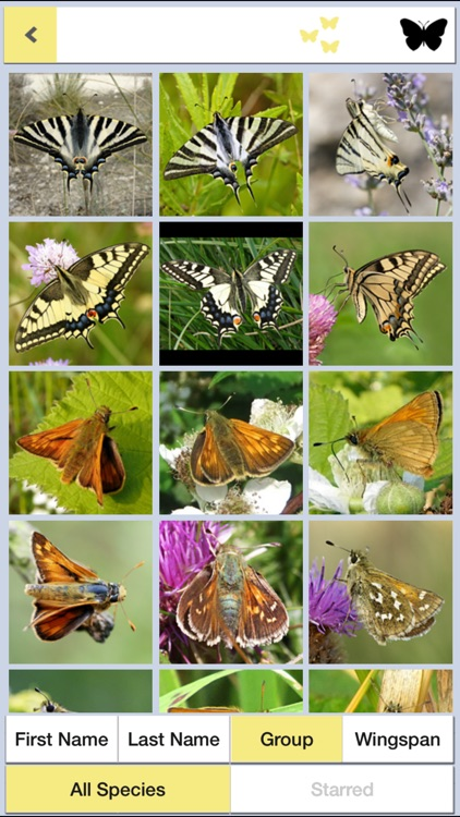 Butterfly ID Britain: A Guide to British Butterflies and Day-flying Moths from iSpiny screenshot-3