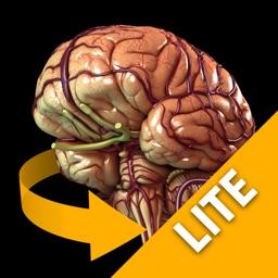 Brain - 3D Atlas of Anatomy Lite