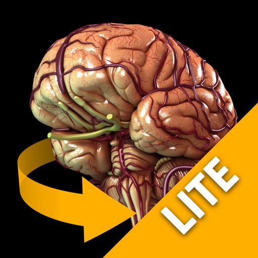 Brain - 3D Atlas of Anatomy Lite
