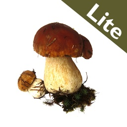 Roger's Mushrooms (Lite)