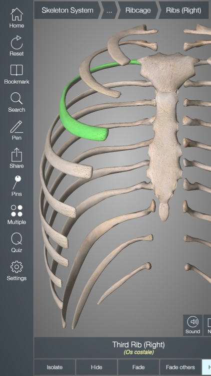 Essential Skeleton 4 screenshot-3