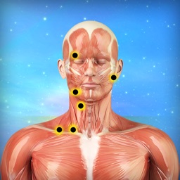 Muscle Trigger Points Massage Therapy