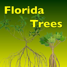Trees - Guide to Common Species of Southern Florida