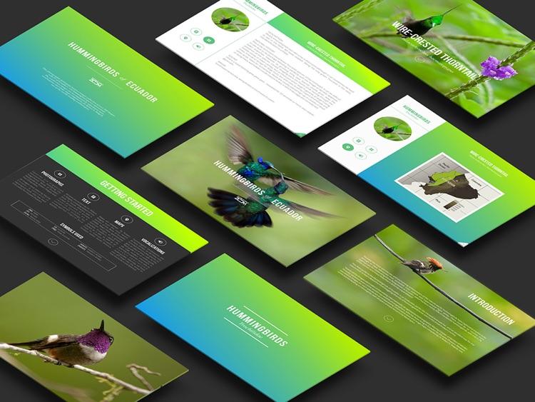 Hummingbirds of Ecuador screenshot-4