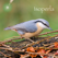 Bird Id - British Isles Identification Guide including all RSPB BGB bird watching survey birds