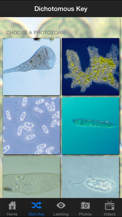 Protozoan Identification-1