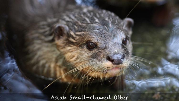 Threatened Species screenshot-3