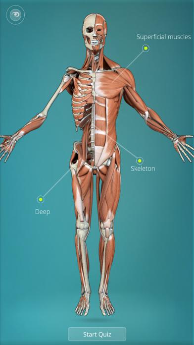 Anatomy Quiz - muscles and bones