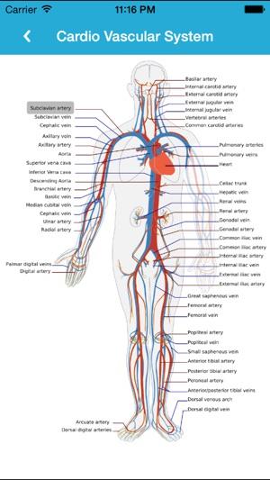 anatomi guide