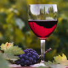 Napa Valley Winery Finder - Lance N Etcitty
