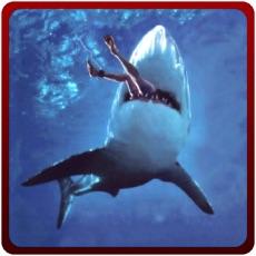 Activities of Angry Shark Attack Simulator – Killer predator simulation game