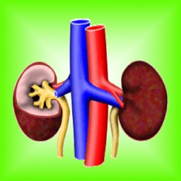 Kidney Diseases Facts: Urology Health Eval Tips Tool, Simulations Guide and Behavior with Renal & Dialysis Glossary Review!