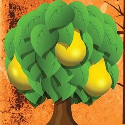 Fruit Loose - Fruit Matching Puzzle Brain Teaser Challenge