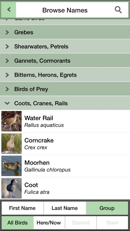 Birds of the Netherlands: A Field Guide from iSpiny screenshot-3