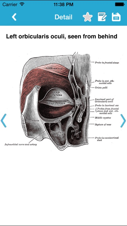 Gray's Anatomy Pro 2014 screenshot-3