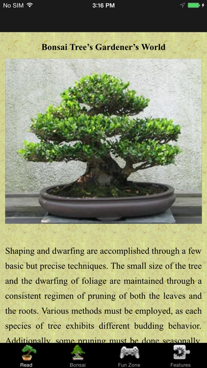 Bonsai Trees: Gardeners World