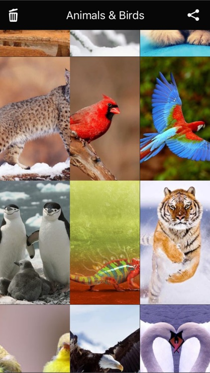 Animals & Birds HD Wallpaper - Great Collection screenshot-3