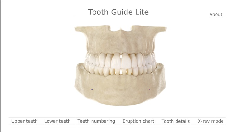 Tooth Guide Lite