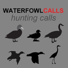 Activities of Waterfowl Hunting Calls SAMPLER - The Ultimate Waterfowl Hunting Calls App For Ducks, Geese & Sandhi...