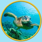 amazing turtles for kids - no ads icon