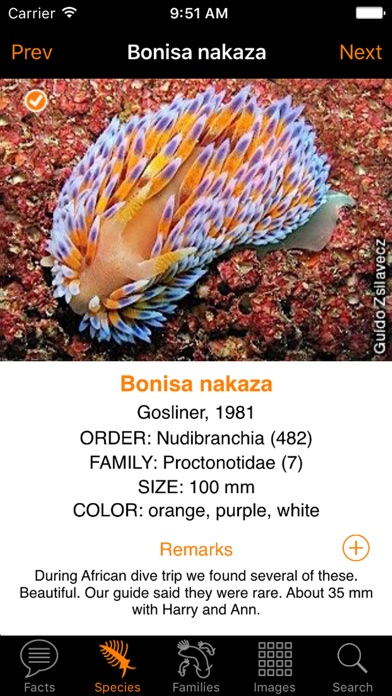 nudibranch id indianocn redsea app price drops
