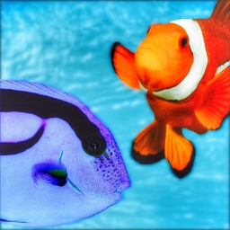 Quiz for Finding Dory - Including trivia questions and answers for Finding Nemo