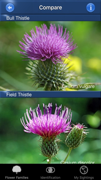 Wild Flower Id USA Photo Recognition - Eastern States Nature Guide of North America screenshot-4