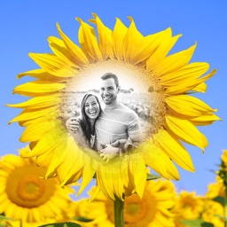 Sunflower Photo Frames - Creative Frames for your photo