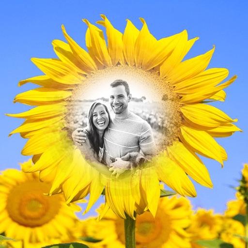 Sunflower Photo Frames - Creative Frames for your photo