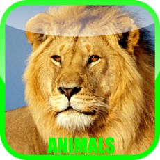 Activities of Animal Zoo Sound Baby Game - fun for all family, parent & babies can play & learn animals sounds in ...