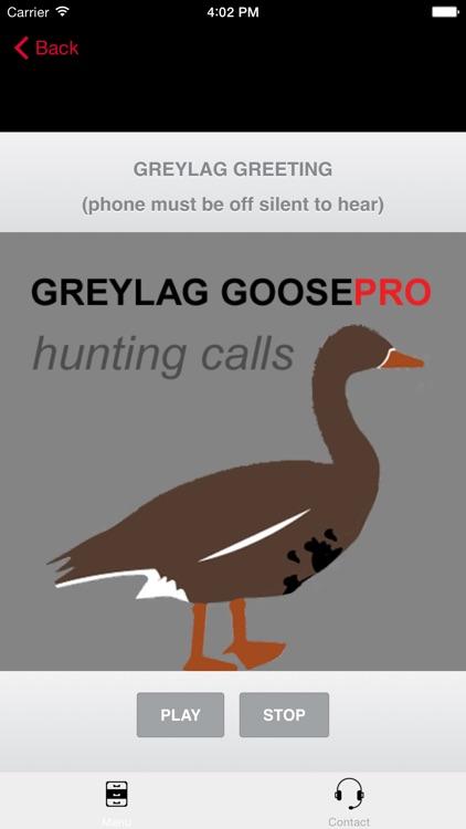 REAL Greylag Goose Hunting Calls + Greylag Goose CALLS & Greylag Goose Sounds! screenshot-0