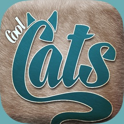 Cool Cats Videos