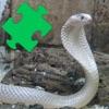 Snakes Amazing Puzzle