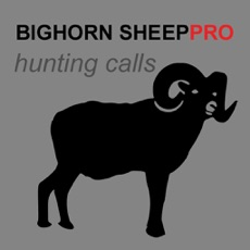 Activities of REAL Bighorn Sheep Hunting Calls - 8 Bighorn Sheep CALLS & Bighorn Sheep Sounds! -- BLUETOOTH COMPAT...