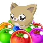 Kitty Bubble Pop GO : Newest Bubble Shooter Pet Recure Puzzle HD 2016 icon