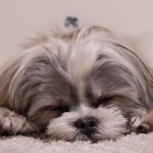 Dog Breeds: Dogs barking sounds, identification, whisperer, emotional free